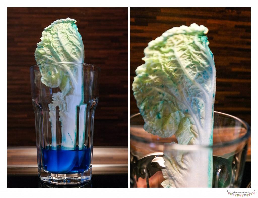 Wasser in Pflanze