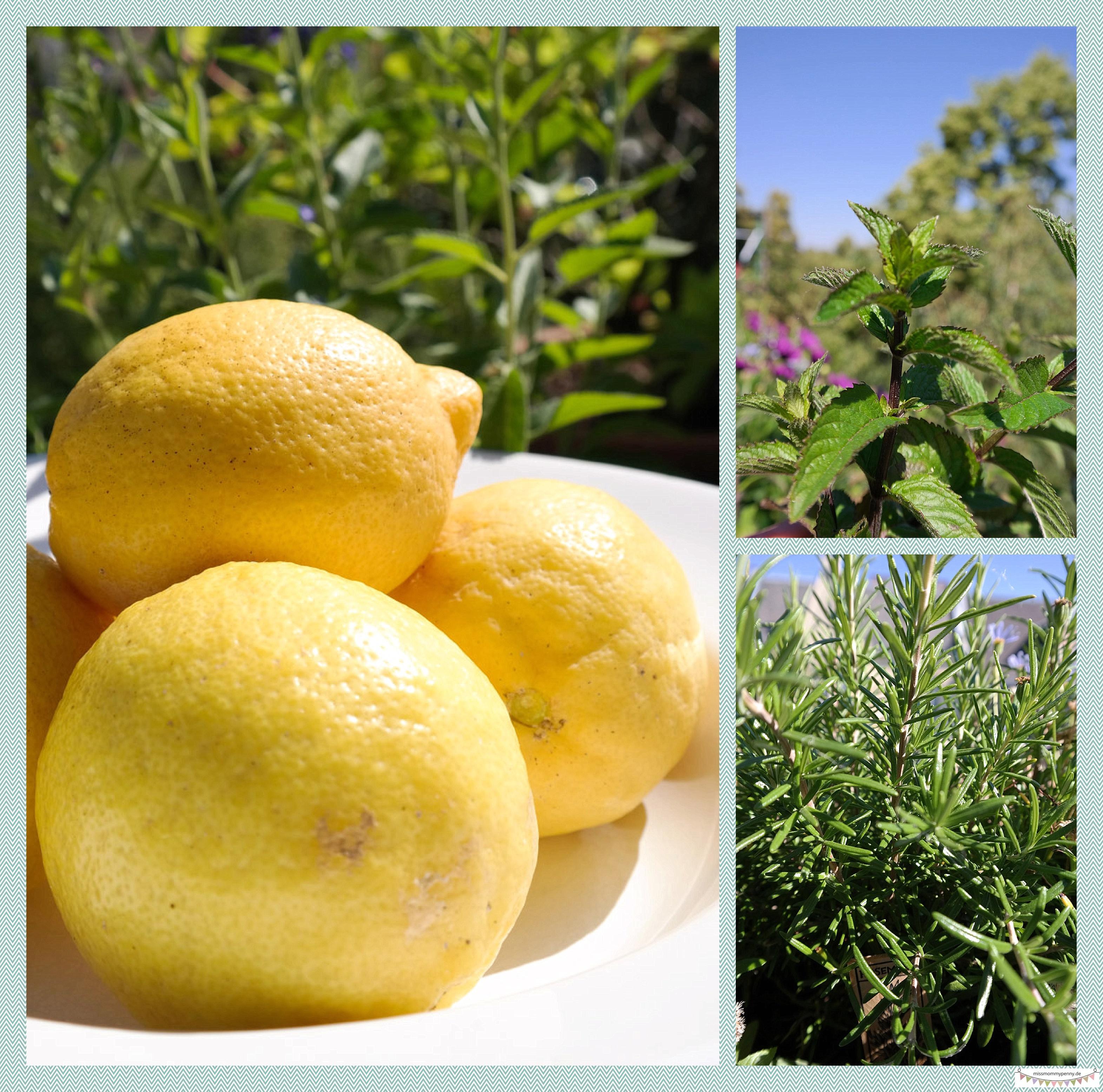 Hausgemachte Bio Limonade Zritone